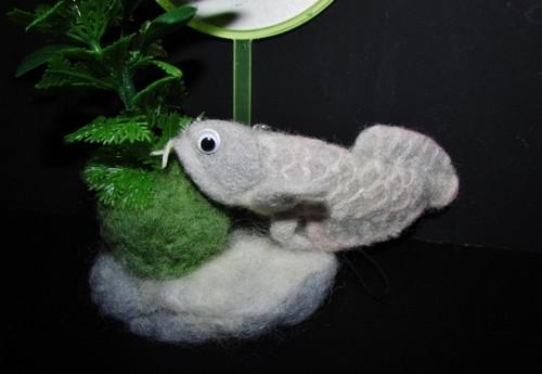 羊毛魚1.jpg