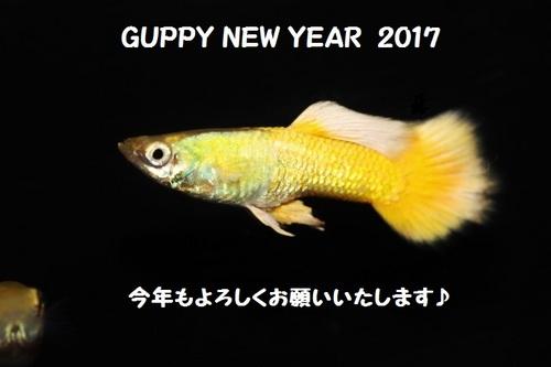 030 2017 ネット用年賀.jpg