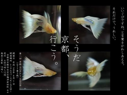 京都GUPPY SHOW2016.jpg