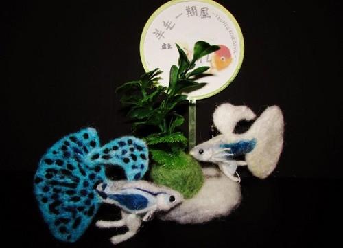 羊毛魚2.jpg