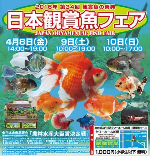 観賞魚フェア.jpg
